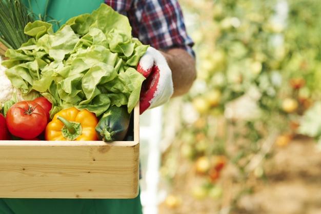 marketing agrícola